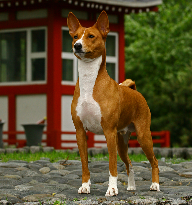 The 10 Oldest Dog Breeds