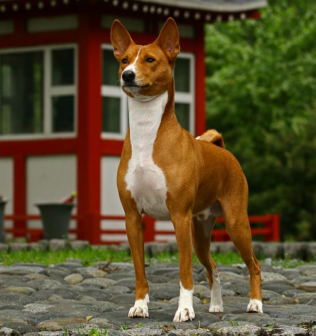 The 10 Oldest Dog Breeds