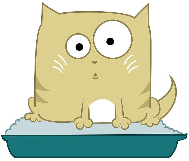5 Litter Box Mistakes Cat Owners Make