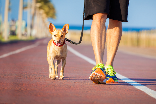 6 Activities That Are Better With Your Dog