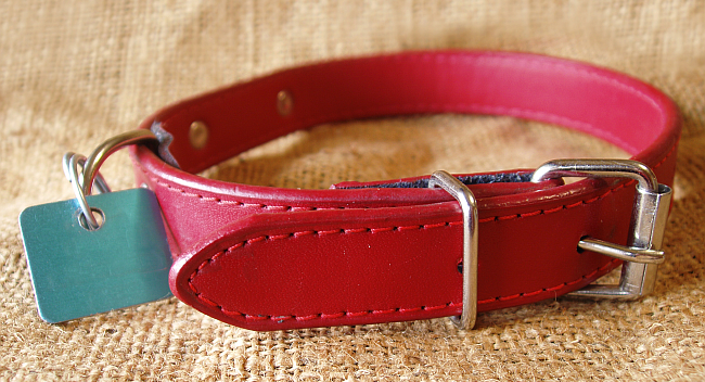 Best Types of Dog Collars