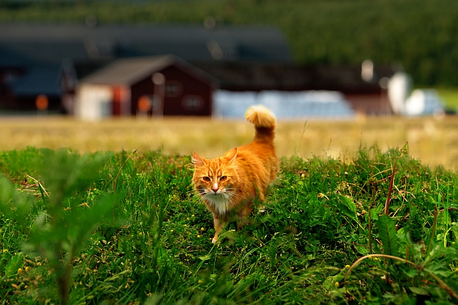 cat on a farm