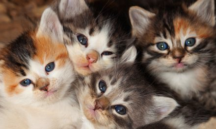 What To Do If You Find An Abandoned Litter of Kittens
