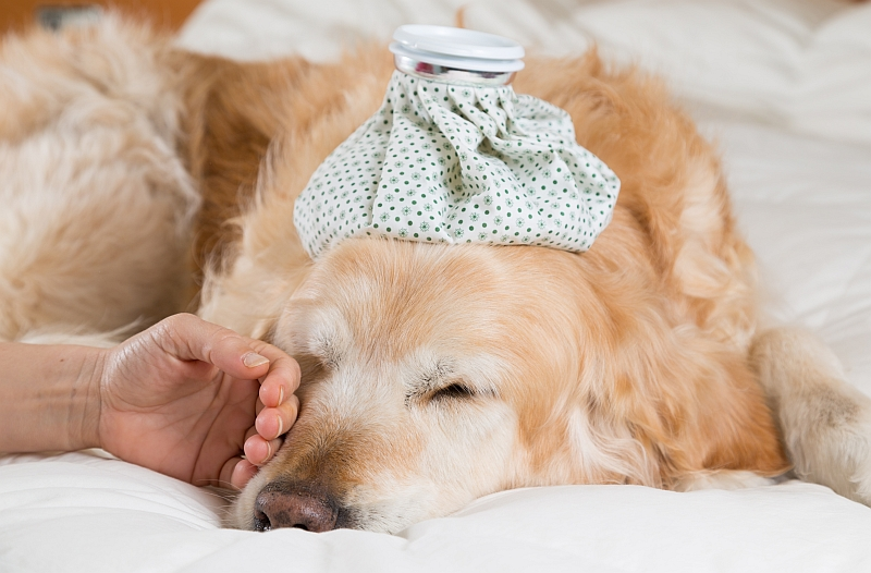 Caring For Convalescing Pets