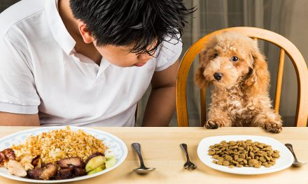 Safety Tips For Feeding Dogs Human Food
