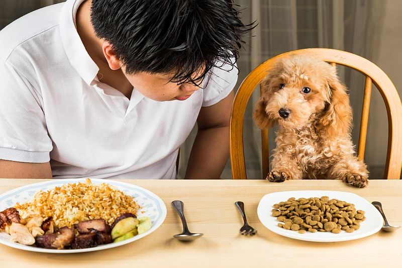 puppy eating dinner with owner at the table
