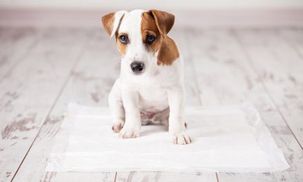 How To Paper Train Dogs