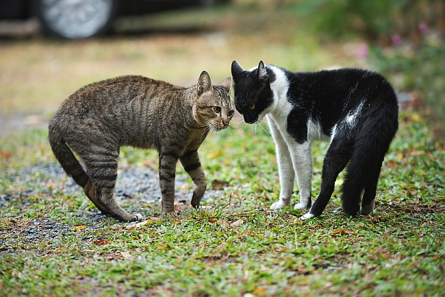Types Of Aggression Between Cats