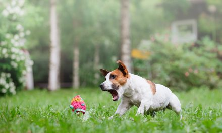 Why Dogs Love Playing Fetch