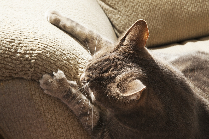 Why Cats Love to Scratch