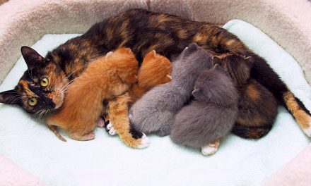 Postpartum Care For Dogs and Cats