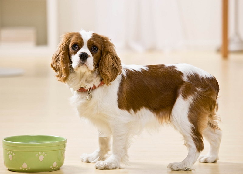 5 Signs It Is Time To Change Your Dog's Food
