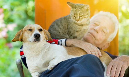 Dogs VS Cats: Who Loves Their Humans More?