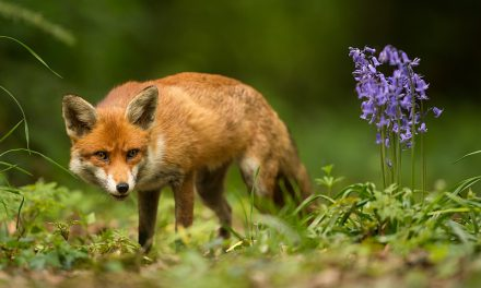 Wild Animals You Should Never Keep As Pets