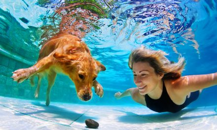 Summertime Bucket List for Pet Owners