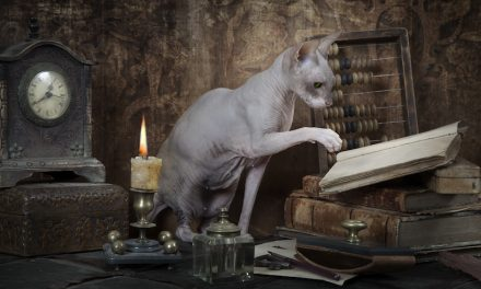 Cats May Possess a Primitive Understanding of Physics