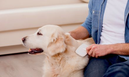 Types of Dog Grooming Brushes & Combs