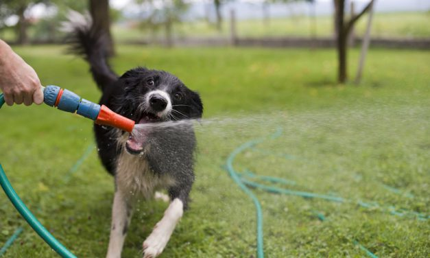 Help Your Dog Keep Cool During Hot Summer Days