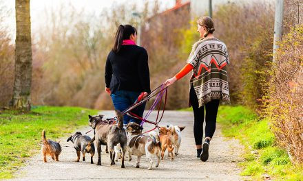 Top 10 Rules of Being a Pet Sitter
