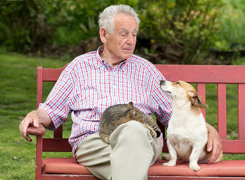 elderly man sitting on park bench with dog and cat
