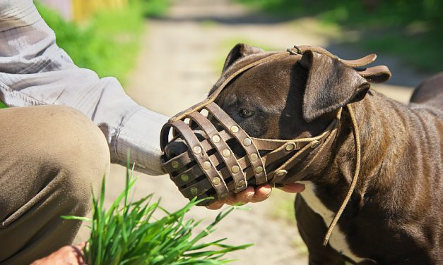 Dog Muzzles: Varieties, Uses, & Complications