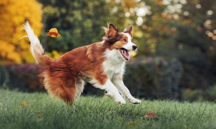 How to Take Great Photos of Your Pet?