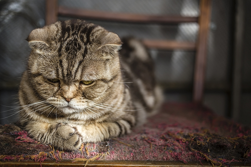 Why Do Cats Isolate Themselves?