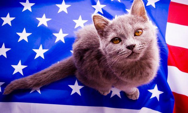 Patriotic Pet Cats