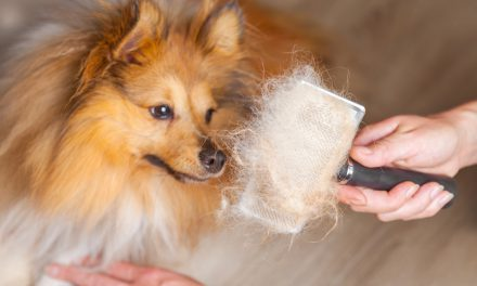 How to Stop Dogs from Shedding