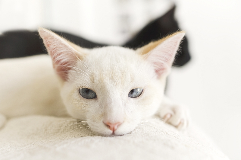 Cat Behavior Expert: What Do Cats Think of Us?