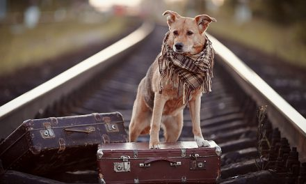 Top 7 Dog Friendly Vacation Destinations