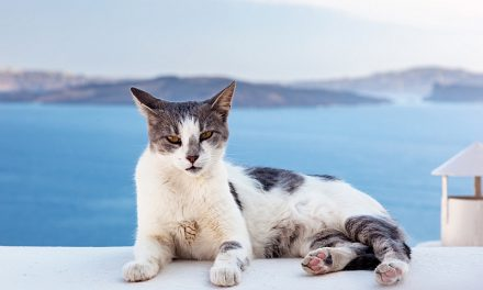 Least Popular Cat Breeds