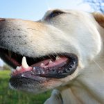 Canine Teeth: All About Dog Teeth