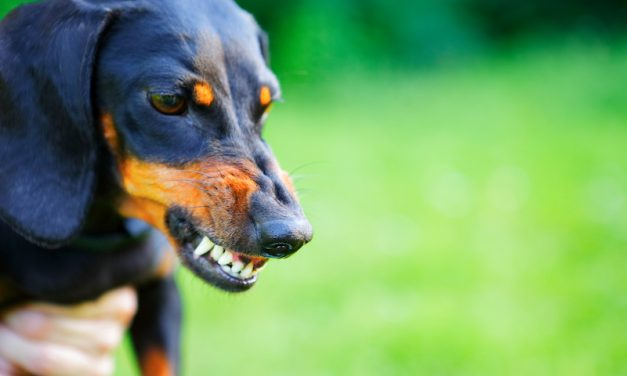 Signs of Aggression in Dogs