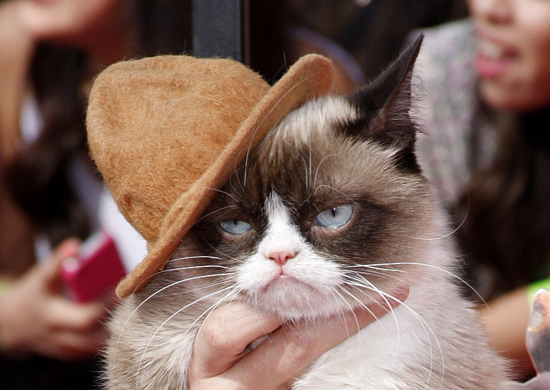 7 Most Famous Cats