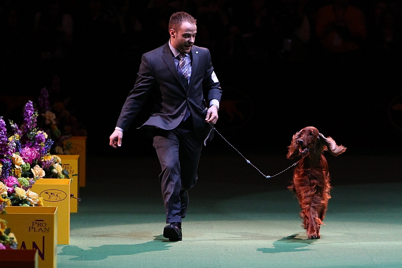 What Makes a Dog Show Quality?