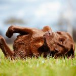Why Do Dogs Roll in Grass?
