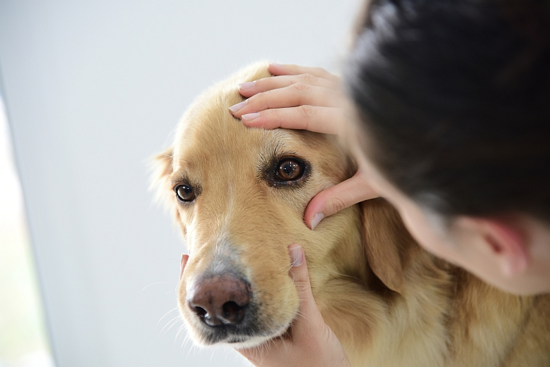 Dog Tear Stains: Tear Removers & Home Remedies