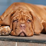 Dog Behaviorist: What is the Difference Between a Dog Trainer & Behaviorist