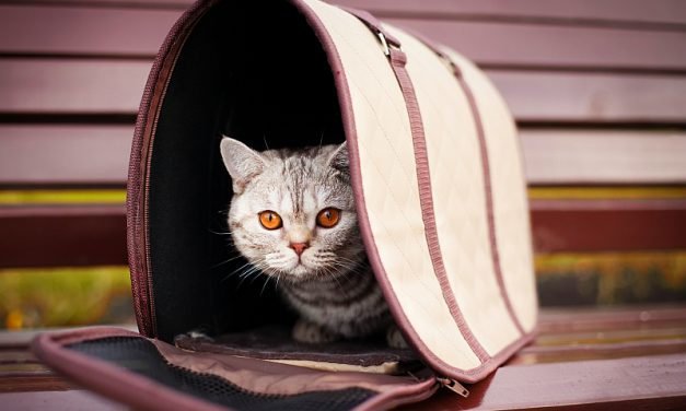 How to Choose a Cat Carrier