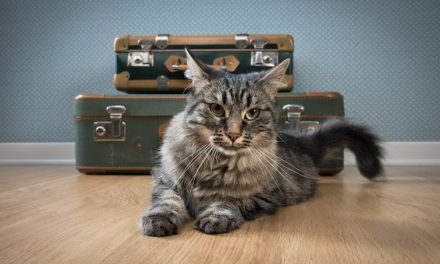 Traveling with Your Cat