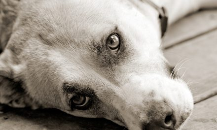 Signs that Your Dog Might Be Depressed