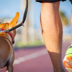 How to Be a Pack Leader for Your Dog