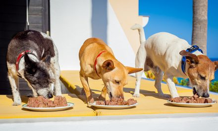 Nutritional Needs of Dogs